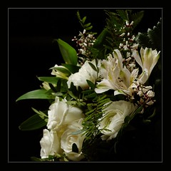 For you (Kirsten M Lentoft) Tags: flowers white rose lily thankyou bday soe loveyou onblack flowerotica fantasticflower insantfave impressedbeauty momse2600 infinestyle onlythebestare mmmwahhhh happyweekendhugh nonotasmanyaspossiblelol kirstenmlentoft