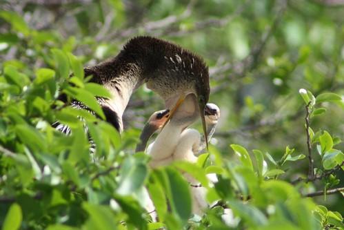 Delray Beach Nature Centers 3-8-08 381