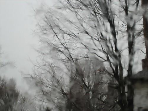 080330. rainy trees.