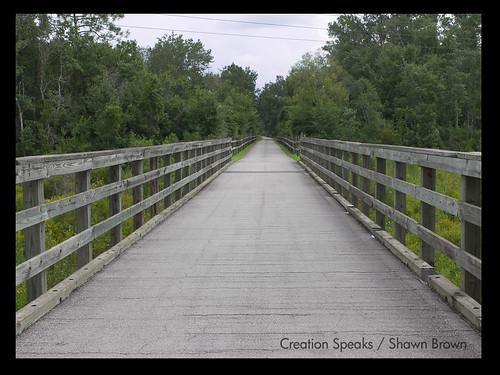 Bridge along trail