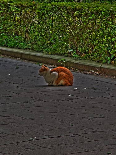 A cat in Tokyo University