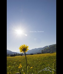 ≈ Good Day Sunshine ≈ (mcPhotoArts™) Tags: sun flower nature sunshine germany landscape bayern deutschland bavaria countryside spring natur blumen blume landschaft sonne springtime garmischpartenkirchen frühling gooddaysunshine sigma1770mm2845dcmacro phtoshopcs4 canoneos550d mcphotoarts©2011 gapaland ffgapashow