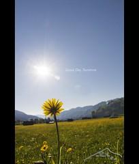 Good Day Sunshine  (mcPhotoArts) Tags: sun flower nature sunshine germany landscape bayern deutschland bavaria countryside spring natur blumen blume landschaft sonne springtime garmischpartenkirchen frhling gooddaysunshine sigma1770mm2845dcmacro phtoshopcs4 canoneos550d mcphotoarts2011 gapaland ffgapashow
