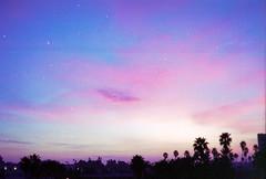 Santa Monica Sunrise (scott w. h. young) Tags: california morning pink blue light sun tree love film 35mm landscape early purple santamonica palm rise