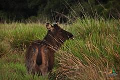Sambhur - Horton Plains