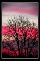 Sky Fascinating (HAMED MASOUMI) Tags: pink sky color tree sunrise canon persian iran violet sigma persia coloring iranian hamed 30d 70300 throughwindow   masoumi hamedmasoumi