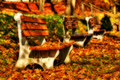 Fallen leaves (dfworks) Tags: autumn fall leaves canon bench pa hdr orton berkscounty 70200f4l 3xp photomatix