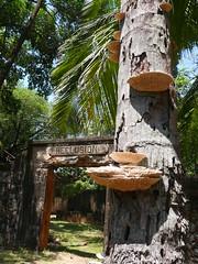 Fungus and prison (Arria Belli) Tags: joseph island fungi prison fungus daedaleaquercina bagne daedalea quercina