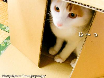 ミア(猫)の写真7