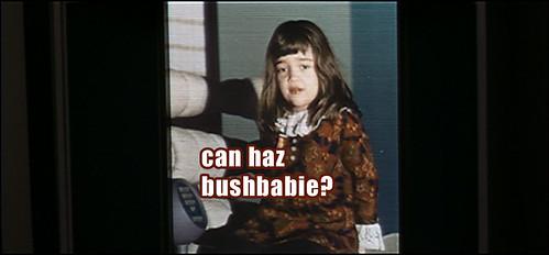 can haz bushbabie?