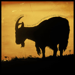 Goat Silhouette - Dictionary of Image (s0ulsurfing) Tags: light orange sunlight black art texture nature silhouette illustration photoshop wow square fur fun island goatee design graphicdesign march cool artwork bravo graphic natural bright image artistic creative silhouettes horns goat manipulation ps cliffs creation goats vectis isleofwight definition layers outline hoof 2008 isle dictionary squared grazing wight clever bold graze capricorn starsign s0ulsurfing impressedbeauty aplusphoto diamondclassphotographer flickrdiamond theunforgettablepictures thedictionaryofimage goldstaraward