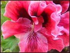 Flor en Pátzcuaro - Mich México 2008 6761
