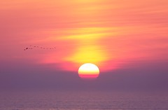 Setting down (vrod2012) Tags: settingsun nature idyllic calmness tranquility seaside birds sun sunset