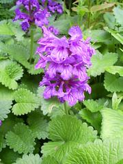 S5031481 (Ian Faz) Tags: flowers plants tress nessgardens