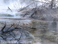 Eerie Travertine Beauty (firstsheaf) Tags: fab reflection photos wyoming magiceye stockshot deadtrees naturesfinest wonderworld blueribbonwinner yellowstonepark supershot beautyisintheeyeofthebeholder greatimage beautifulcapture mywinners supershots anawesomeshot travertineterraces canarysprings goldenphotographer diamondclassphotographer flickrdiamond excellentphotographerawards freenature thebestofgodscreation naturalmist mostbeautifulandawesomephotos