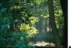 NL/Nature/Forest (oopsfotos.nl) Tags: autumn sun sunlight holland nature netherlands forest thenetherlands r1 oop