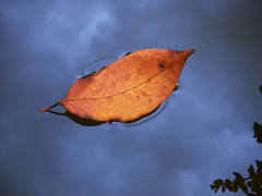 Leaf in the sky... (icemanigation) Tags: blue autumn sky orange cloud color reflection fall nature water leaves clouds season landscape leaf nikon branch dal coolpix su float bulutlar mavi p2 akis hazan bulut gkyz yansma nikoncoolpix sonbahar yaprak nikoncoolpixp2 gz gk coolpixp2 turuncu fotorafkraathanesi icemanigation