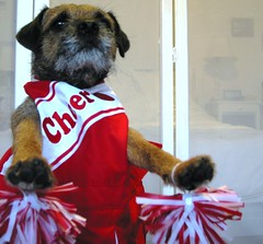 Tony Sez - (Ingrid!) Tags: dog video tony terrier cheerleading bt ingridspangler borderterrier youtube tonysez tonybasil ohmickey rahrahsisboombahbitches