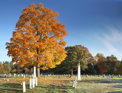 Autumn Cemetery Tree 2 Panorama