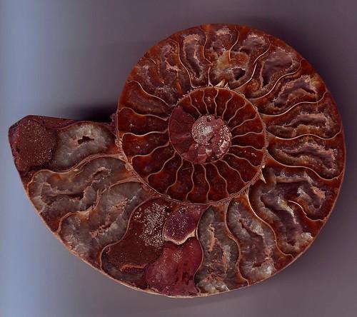 Spirale meravigliosa por aldoaldoz.