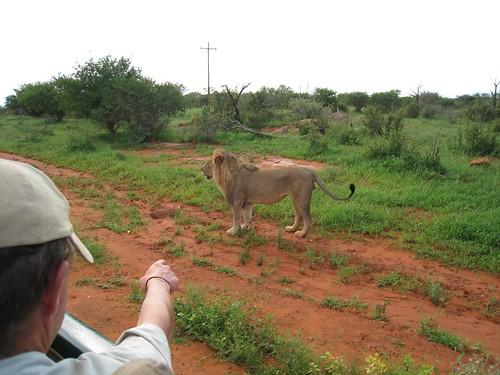 055-lion-00