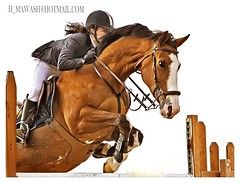The Dream's Knight (HANI AL MAWASH) Tags: horse art photo al jumping action jumper kuwait rider hani  artphoto             kuwaitphoto   almawash kuwaitartphoto kuwaitart  mawash newburning