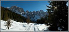 Val Venegia (grande formato) (Lanfranco Brugnoli) Tags: snow pale neve dolomites sanmartino fiemme blueribbonwinner venegia pentaxk10d diamondclassphotographer