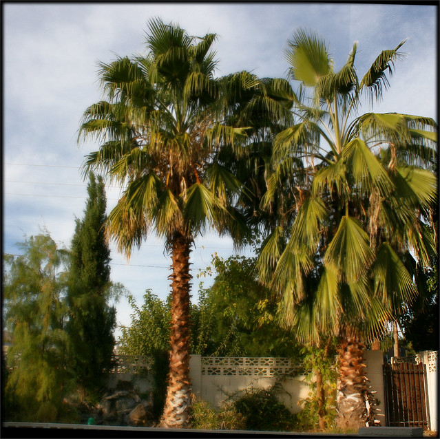 Palm Trees and Cactus, 2006