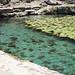 Cenote (water filled sinkhole) at Dzibilchaltun