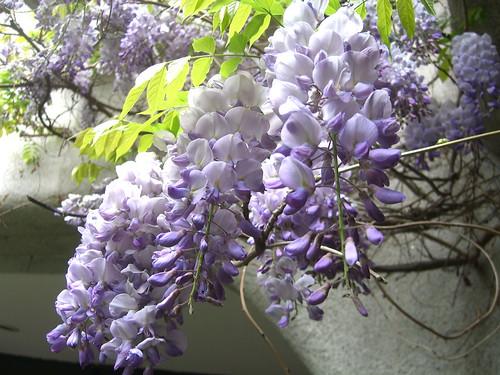 Irish Flowers