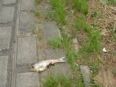 うへっナゾの魚の屍骸が・・・