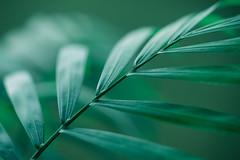 Pflanze (christianreimer) Tags: reflektionen reflections plant green macro pflanze makro grün