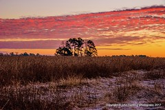 Frost In The Field (T i s d a l e) Tags: tisdale frostinthefield soybeans dawn clouds frost winter december 2016 easternnc