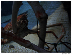 Dans le filet (Greyshift11) Tags: life sea mer france lumix dragon nemo clown panasonic bleu g1 mm 45mm dory dmc geant poissons 1445 200mm crabe 14mm murene crabzilla hippocampe chirurgien hippocampes dmcg1