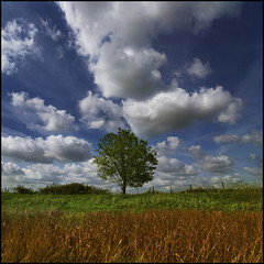 Between the land and sky (adrians_art) Tags: trees plants leaves clouds bluesky wetlands marshland greengrass reedbeds