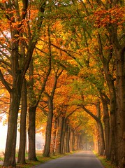 Allee (luzzzelmann) Tags: autumn mist nature fog germany landscape deutschland nebel herbst handheld nrw hdr breathtaking mnsterland smrgsbord muensterland naturesfinest blueribbonwinner 3xp drivebypic supershot 100faves 200faves 35faves platinumphoto superaplus aplusphoto diamondclassphotographer luzzzelmann schloddiewatt photographinglandscapes top20autumn bestofautumn thegoldendreams top20autumn20 beamtenpupa