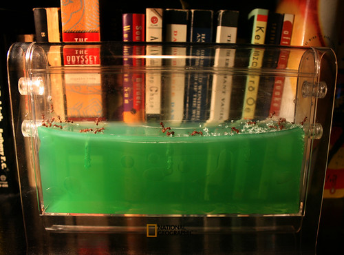 For the blog - H.o.p.'s new ant farm
