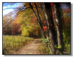 Autumn Morning (greekstifado - Yanni) Tags: autumn trees fab color fall love philadelphia nature water colors grass leaves landscapes meadow parks dreamy creeks naturesfinest blueribbonwinner passionphotography abigfave platinumphoto superbmasterpiece infinestyle megashot citrit excellentphotographerawards thegoldenmermaid sailsevenseas