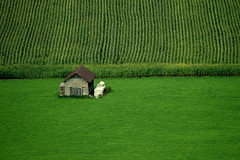 Lines (Fispace) Tags: green landscape switzerland suisse swiss vert mais gruyeres cabane vaches gruyere barrack