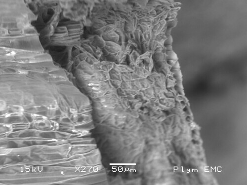 Photo taken with an electron microscope of a blade of grass
