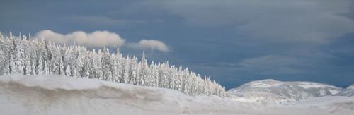 Treeline of white