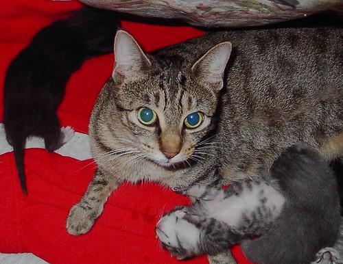 Kittens , What kitten's ?