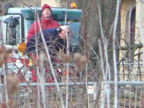 Baumfällarbeiten an der Bautzner Straße (04)