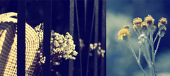 It Will Never Fail You (Erik Holmberg) Tags: grass diptych sweet collaboration sweetgrass