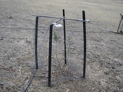 example of repaired olive fence