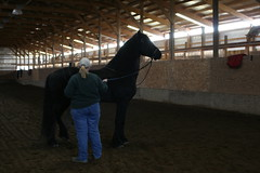 Picture1 032 (larissa_allen) Tags: horses horse black photography indiana keegan ponies equestrian equine blackstallion friesian friesians horsetraining friesianhorses friesianhorse blackhorses friesianstallion