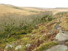 Wistman's Wood (Dartmoor) - 23/02/2008 (DavidC Photography) Tags: wood winter tree nature rain moss path reserve boulders peat devon lichen february 2008 dartmoor tolkien ents wistmans