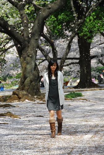 新宿御院賞櫻 - 櫻吹雪