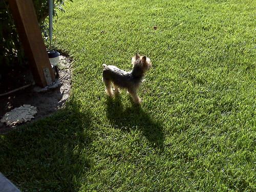 Saffy in the grass
