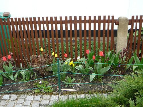 Tulpen 2008 (08)